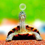 Elogio alla lentezza